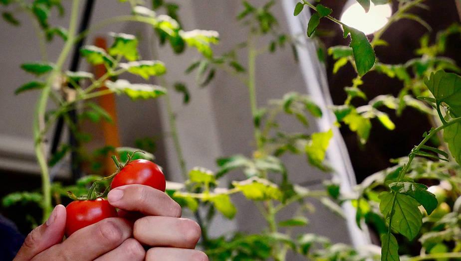 rajcata-doma-jak-na-to