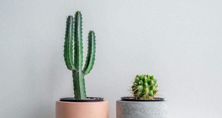 3 základní pravidla pro úspěšné pěstování kaktusů