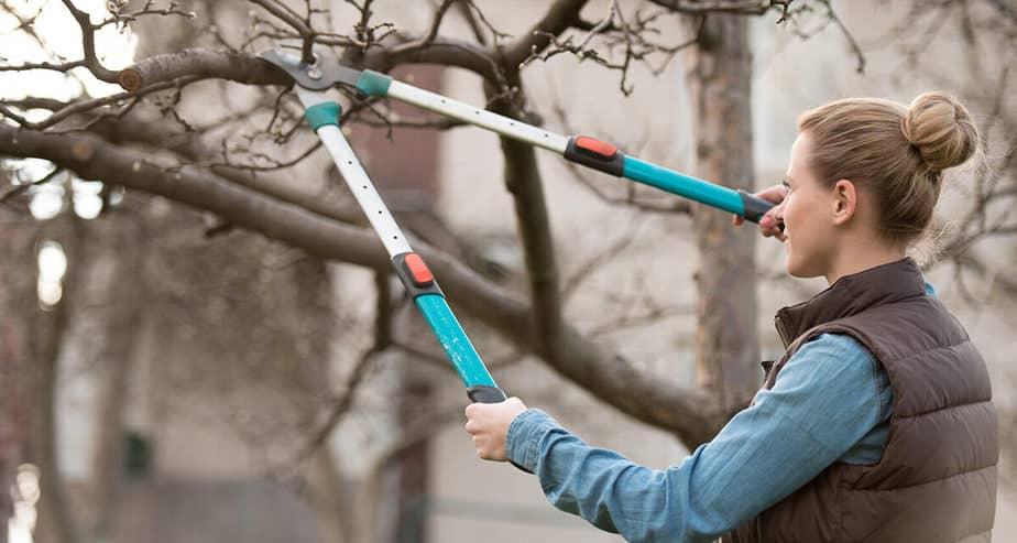 Jak prořezávat stromy a které nářadí použít?