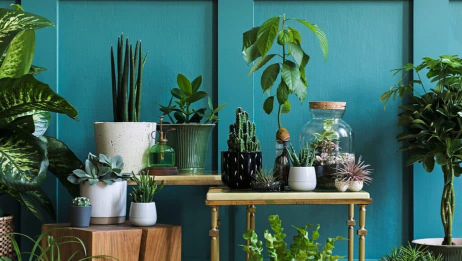 kaktusy-jak-pestovat