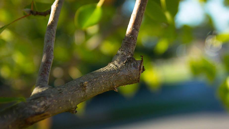 prorez-stromu