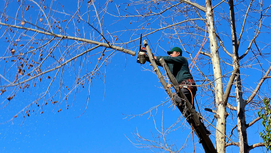 jak-prorezavat-stromy