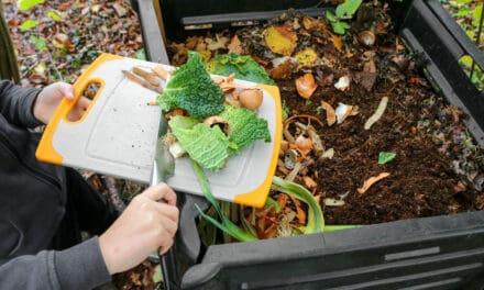 Domácí kompostér: Od jeho založení až po to, jak správně kompostovat