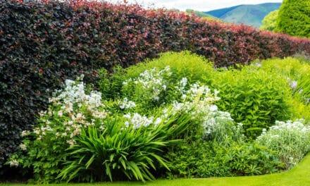 Jaké jsou vhodné keře na živý plot? Některé vás okouzlí krásnými květy, jiné svým rychlým růstem