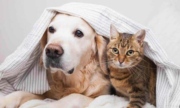 Zvířecí paraziti aneb odčervování psů a koček